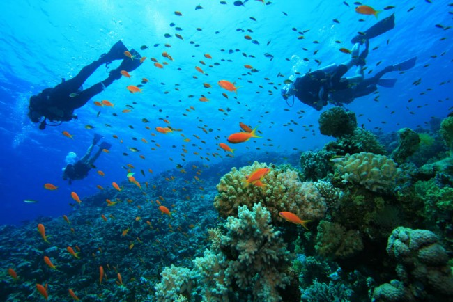 3 Top Dive Resorts in the Caribbean Revealed